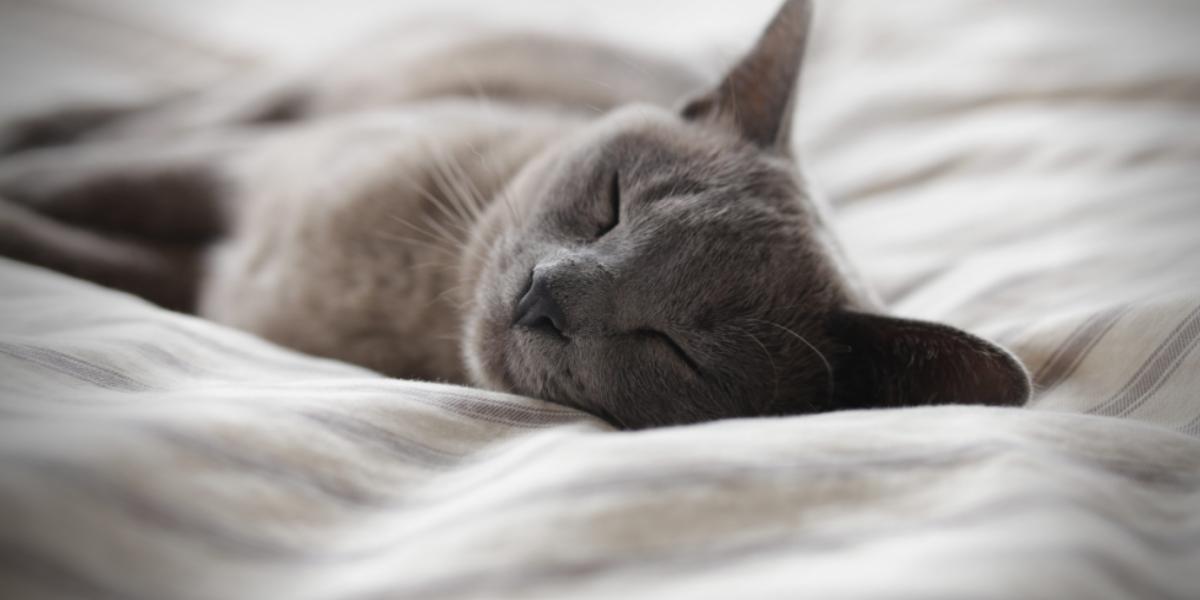 Сънуват ли животните?